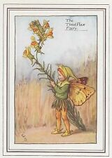 CICELY MARY BARKER c1930 THE TOADFLAX FAIRY Painting Vintage Art Book Print
