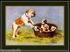 English Picture Print Bulldog Bull Dog Puppies Art