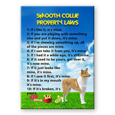 Smooth Collie Property Laws Fridge Magnet Funny