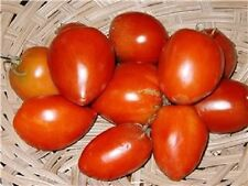 50 AMISH PASTE TOMATO Red Heirloom Roma Type Lycopersicon Fruit Vegetable Seeds