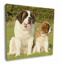 More details for st bernard dog and puppy 12