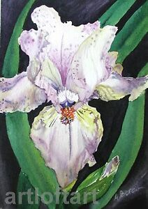 Light Purple Iris  FLOWER ACEO Card Print by A Borcuk