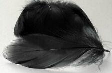 Barred Mallard Feathers - Black