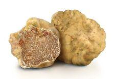 20 g Fresh WHITE TRUFFLE Tuber Magnatum Mushroom Spawn Seeds Spores Mycelium