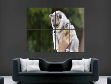 CUTE BABY HUSKY PUPPY  WALL POSTER ART PICTURE PRINT LARGE HUGE