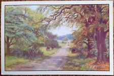 LYNDHURST BOURNEMOUTH Rd New Forest A R Quinton 1986 Salmon POSTCARD Ponies