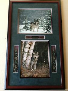 """Millcreek Wildlife Reflections """"Timber Wolf"""" 2 Photos, Hand Signed, Framed"""