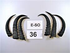 6 Springbockhörner, Tierhörner 2. Wahl, Perchten, Krampus,  E-SO 36