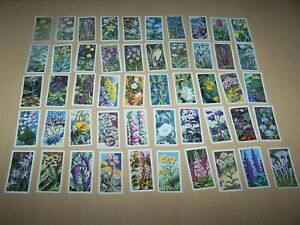Loose Brooke Bond Picture Cards - Wild Flowers Series 2 ~  50/50