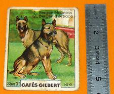 CHROMO 1920 1930 CAFE GILBERT BERGER MALINOIS BERGER D'ALSACE SERIE XI N°6