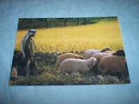 VINTAGE - POST CARD - ''JERUSALEM'' SHEPHERD'S FIELD