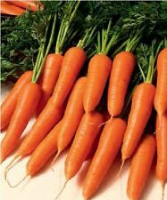 Vegetable - Carrot - Flyaway F1 - 200 Seeds - Economy