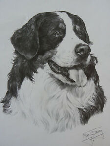 Bernese Mountain Dog Print - Mike Sibley - Open Edition