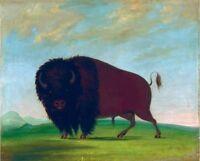 "oil painting on canvas "" Buffalo Bull, Grazing on the Prairie ""N10086"