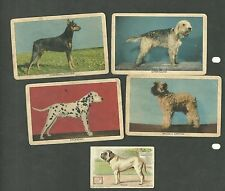 5 Different Non Sport Dog Cards T.C.O.Y. Inc. Brussels Griffon Doberman Pinscher