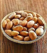 Jack Fruit Seeds fresh Bonsai Organic seeds SRI LANKA (10 seeds pack) protein