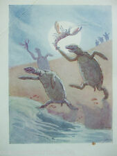 ANTIQUE PRINT C1920S ALICE IN WONDERLAND LEWIS CARROLL MARGARET W TARRANT ART