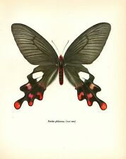 "1963 Vintage PROCHAZKA BUTTERFLY ""THE COMMON WINDMILL"" GORGEOUS COLOR Lithograph"