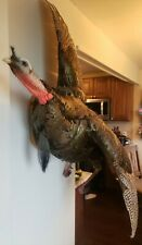 "Turkey mount ""flying"" left facing taxidermy Midwest Bird BeautifulFree Shipping"