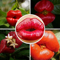 20pcs Sexy Red Lip Flower Seeds Psychotria Elata Seeds Home Garden Plant Decor