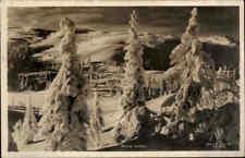 NORWEGEN Norge Norway ~1930/40 Winter Landschaft Vereiste Verschneite Bäume Tree