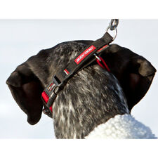 EzyDog Checkmate Training Collar - Red, Blue and Black