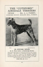 AIREDALE TERRIER OLD VINTAGE 1934 NAMED DOG PRINT PAGE CH. COTSFORD TOPSAIL