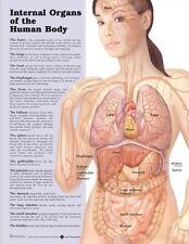 INTERNAL ORGANS (LAMINATED) POSTER (66x51cm) ANATOMICAL CHART HUMAN BODY MEDICAL
