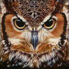 Owl Full Drill DIY 5D Diamond Painting Kit Art Embroidery Wall Decor Gift Crafts