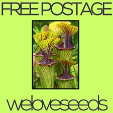 LOCAL AUSSIE STOCK - Pitcher Plant, Sarracenia Oreophila Seeds ~10x FREE SHIP