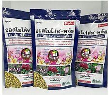 Flor-Cosmos-Fórmula de alfombra 250 semillas-Grande