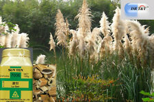 Dr T&t Lu GEN/Reed rizoma 100g Concentrada Polvo 1:5