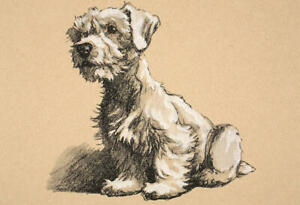 Framed Cecil Aldin Print - Sealyham Terrier circa 1900 (Antique Animal Picture)