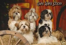 Shih Tzu Get Well Soon Card By Starprint - No 1