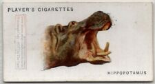African Hippopotamus 85+ Y/O Ad Trade Card