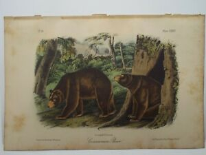 Audubon Quadrupeds  Print Volume 3 1854 Cinnamon Bear Plate CXXVII
