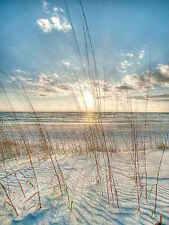 Among the Grass Robert Jones Photography Coastal Ocean Beach Print Poster 18x24