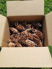Natural Harvest of  Pine Cones, batch of 100. SHIPPING INCLUDED!
