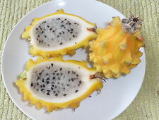 15 X YELLOW DRAGON FRUIT Seeds Rare Exotic Plant FREE SHIPPING