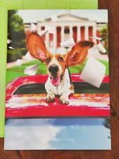 AVANTI PRESS BASSET HOUND WITH EARS UP CELEBRATING GREETING GRADUATION CARD