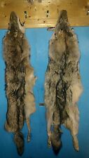 Real animal Tanned Coyote Fur skin hide Pelt taxidermy rug part piece art craft