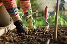 Kit jardin potager lot de + de 2300 Graines legumes BIO semis plantes anciens