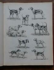 Joseph OBERTHUR - Animaux de venerie et chasse aux chiens courants - 2 vol. 1947