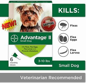 Advantage II - 6-Dose Topical Flea Treatment and Prevention, for Small Dogs -NEW