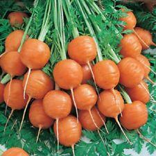1,000 Carrot Seeds Parisian Carrot Vegetable Seeds BULK SEEDS