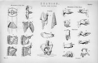 1880's original print - drawing the arm and hand