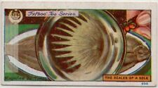Sole Fish Scales Magnified 20 X 1920s Trade Ad Card