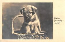 B98726 geburtstag birthday dog chien in basket  animaux animals germany