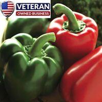 bell pepper seeds 70+ seeds california wonder Heirloom vegetable seeds