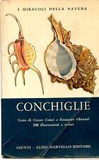 Conchiglie I Miracoli della Natura - Giunti - Aldo Martello Editore 1974